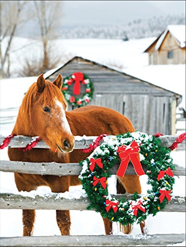 Barn Horse Boxed Holiday Full Notecards