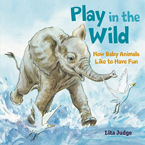 Play in the Wild: How Baby Animals Like to Have Fun