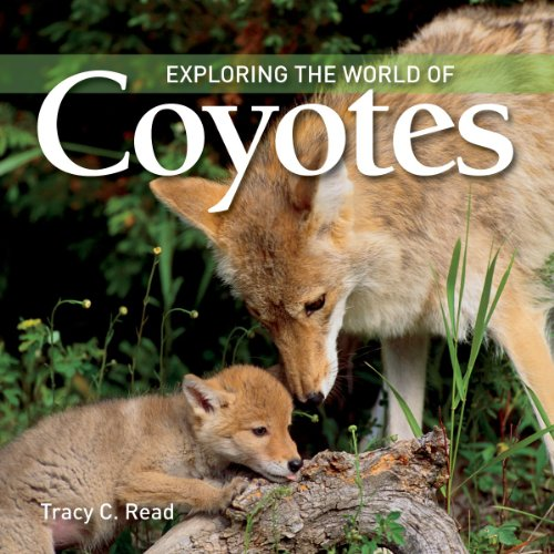 Coyotes (Exploring the World of)