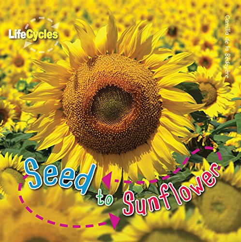 Seed to Sunflower (LifeCycles)