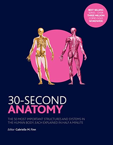 Anatomy (30-Second)